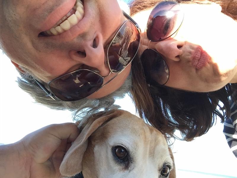 Beagle im Bulli